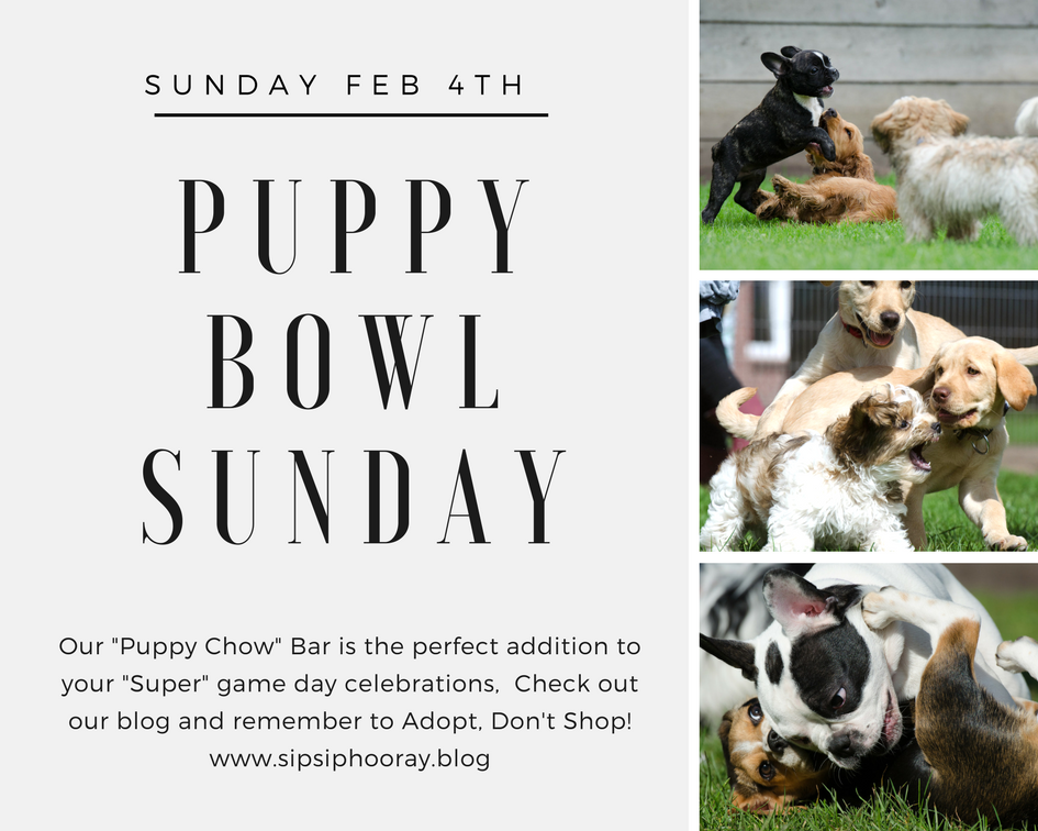Sun 02/04 Puppy Bowl Sunday…. Oh Yeah and the Super Bowl Too